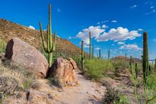 Saguaro National Park Near Tuc...