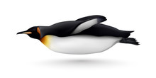 Swimming Penguin Realistic Iso...