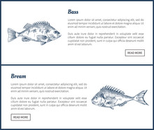 Bass And Bream Seafood Set Vec...