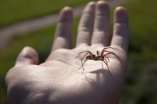 Spider On Palm