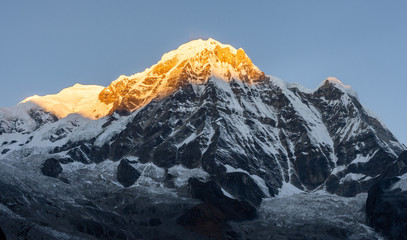Fototapeta Wschód / zachód słońca Close-up view of Annapurna South montain peak against clear blue sky during sunrise ( golden hour) in the Himalayas