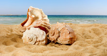 Image Of Sea Shells On Sea Background