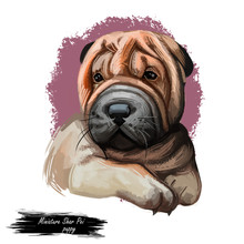 Miniature Shar Pei Dog, Puppy Of Chinese Origin Digital Art