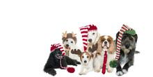 CUTE DOG CHRISTMAS BANNER WEARING SANTA HATS AGAINST GRAY BACKGROUND DEFOCUSED OVERLAYS.