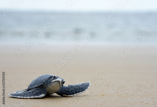 Poster Tortue turtle baby On the beach Copy space