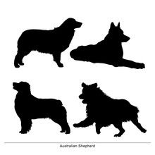 Australian Shepherd Breed Dog....