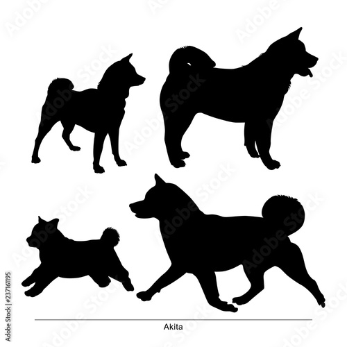 Akita breed dog. Vector silhouette of the dog Canvas Print