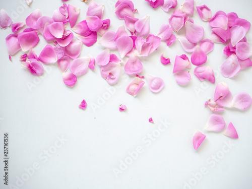 Deurstickers Kersenbloesem pink rose petals on white background