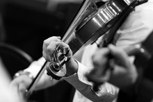 Hands Of A Violinist In The Orchestra Closeup In Black And White