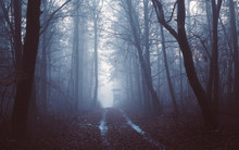 Foggy Winter Path In The Scary Forest