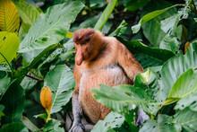 Monkey Between Green Foliage Of Trees