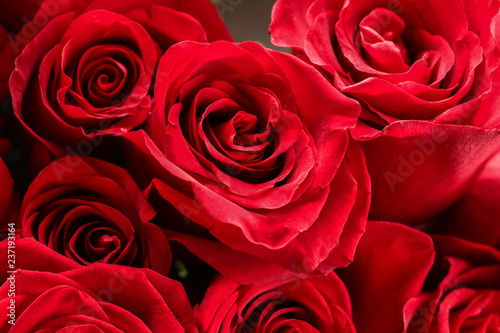 Bouquet of beautiful red roses, closeup #237193164