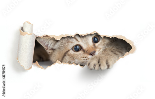 Photo  Funny cat looking through paper hole