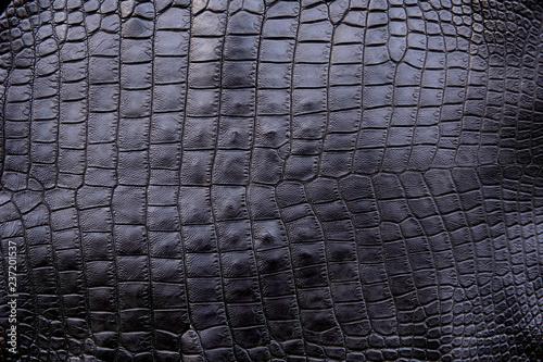 Close Up Of Black Crocodile Alligator Belly Skin Texture Use
