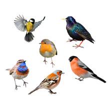 Set Of Many Birds Of European Part On White Isolated Background
