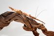 Guadeloupe-Stabschrecke / Zimtstabschrecke  (Lamponius guerini) - Guadeloupe Stick Insect