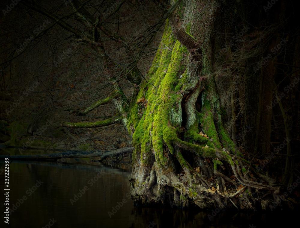 Fototapety, obrazy: Bajkowe Drzewo