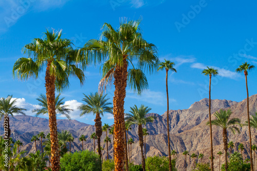 Photo Palm trees with mountain range background in La Quinta, California in the Coache