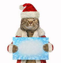 The Cat In Santa Claus Clothes Is Holding The The Blank Sign. White Background.