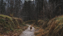 Cute Dog Running On Path In Countryside