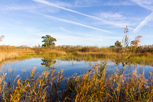 Panoramic view of a bird observatory, in the wetlands natural park La Marjal in Canvas