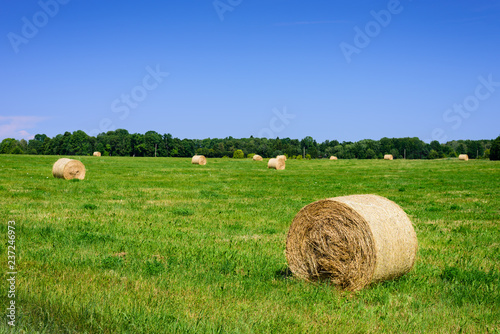 Beautiful meadow with green grass and hay roll on blue sky background with clouds. Typical summer landscape on Hiiumaa island, Estonia