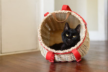 Black Cat Peeks Out Of A Basket