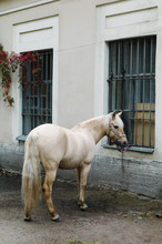 Clipper Horse Parked On Street