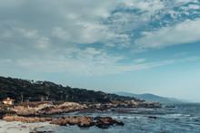 Cypress Grove On An Ocean Coast
