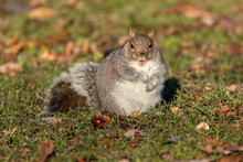 Squirrel With Mouth Open