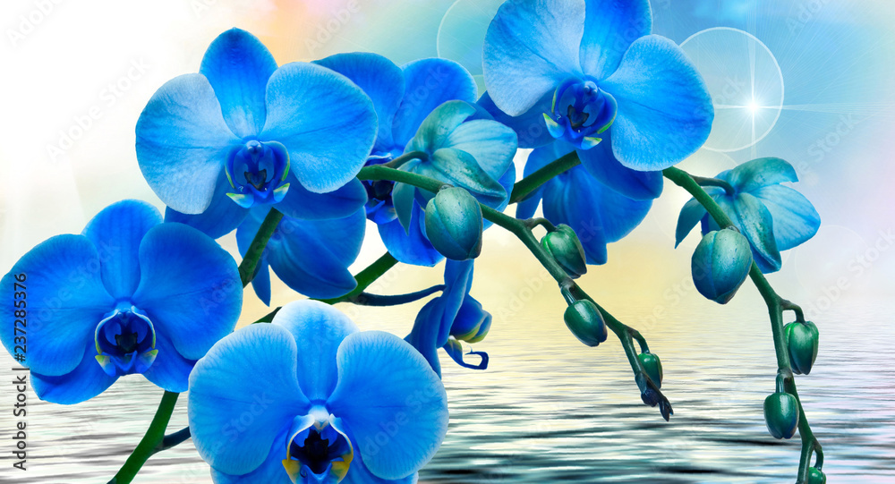 Fototapety, obrazy: abstract floral background with blue flowers
