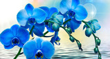 Fototapeta Storczyk - abstract floral background with blue flowers