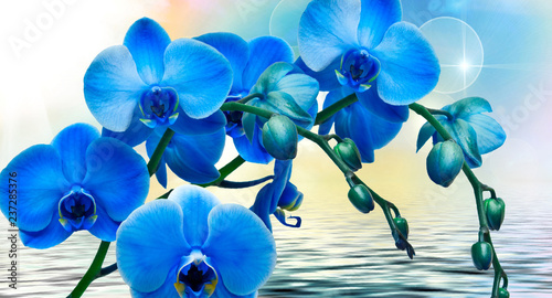 Keuken foto achterwand Orchidee abstract floral background with blue flowers