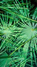 Flashlit Palmtree At Night. Double Exposure.