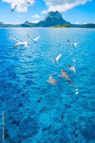 Foto op Canvas Onder water Bora Bora