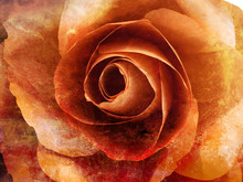 Orange Rose Closed Up Grunge Abstract Background Texture