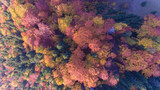 Colourful forest at fall - 237303970