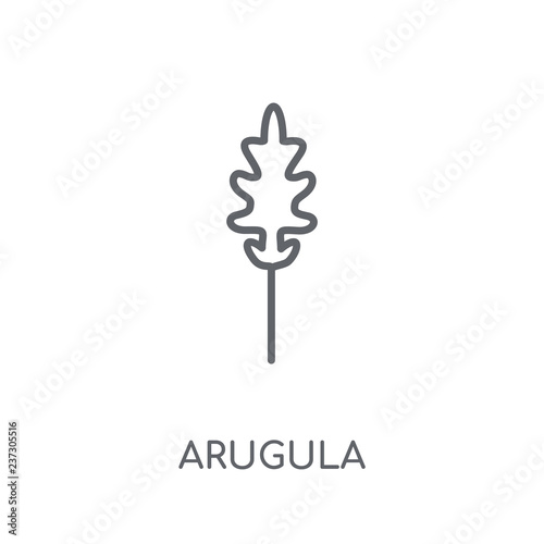 Photo Arugula linear icon