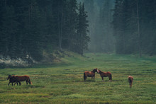 Horses In Misty Valley Of Mountains