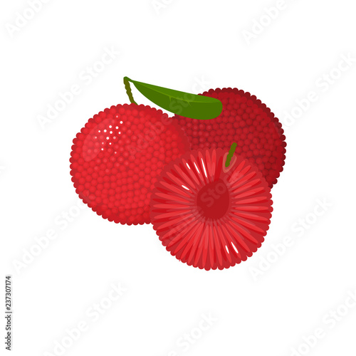 Cartoon fresh yumberry fruit isolated on white Wallpaper Mural