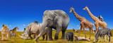 Fototapeta Sawanna - Wild animals collection panorama