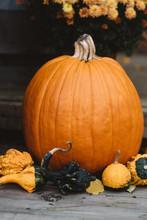Festive Pumpkins