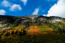 Bright Fall Colours On An Alpine Slope