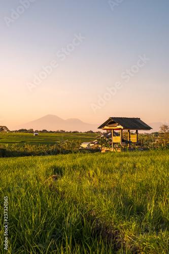 Foto auf Gartenposter Reisfelder Magic sunset on the sunlit rice field
