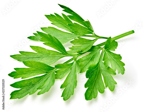 Fotomural  Parsley isolated on white