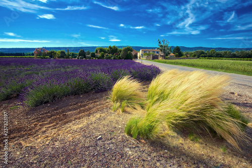 Poster Cappuccino Lavender fields in France