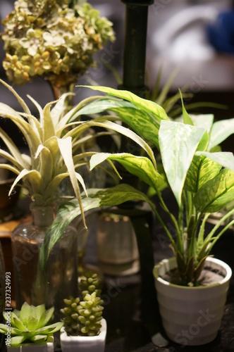 Garden Poster Plant 観葉植物