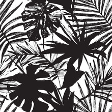 Vector Tropic Illustration In Black And White Colors