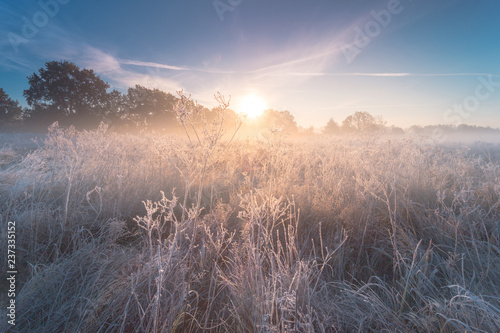 Photo Stands Autumn Beautiful autumn sunrise landscape with hoarfrost on the grass.