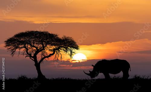 Cuadros en Lienzo Africa wildlife and wilderness concept